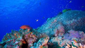 scuba diving okinawa